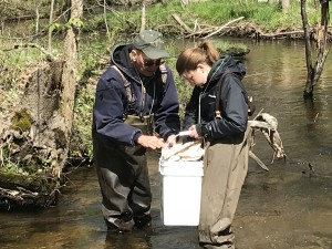 Volunteers John and Becca search for aquatic insects below Queen's Highway