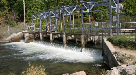 Little Manistee River Weir Trout and Salmon Counts 1968-2013