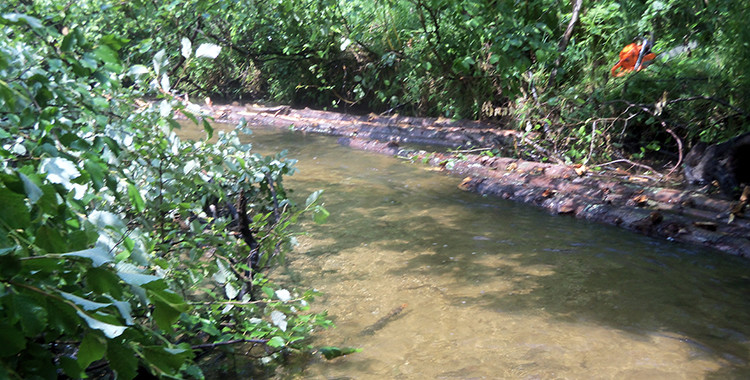 Syers Creek Habitat Improvement Shows in Fish Numbers