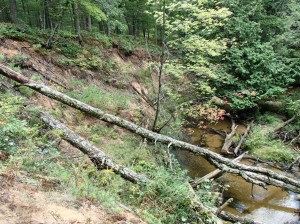 Carrieville Erosion Site #10 after (2)