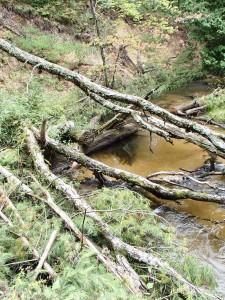 Carrieville Erosion Site #10 after