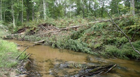 Carrieville Erosion Site #13 after (2)