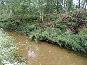 Carrieville Erosion Site #13 after